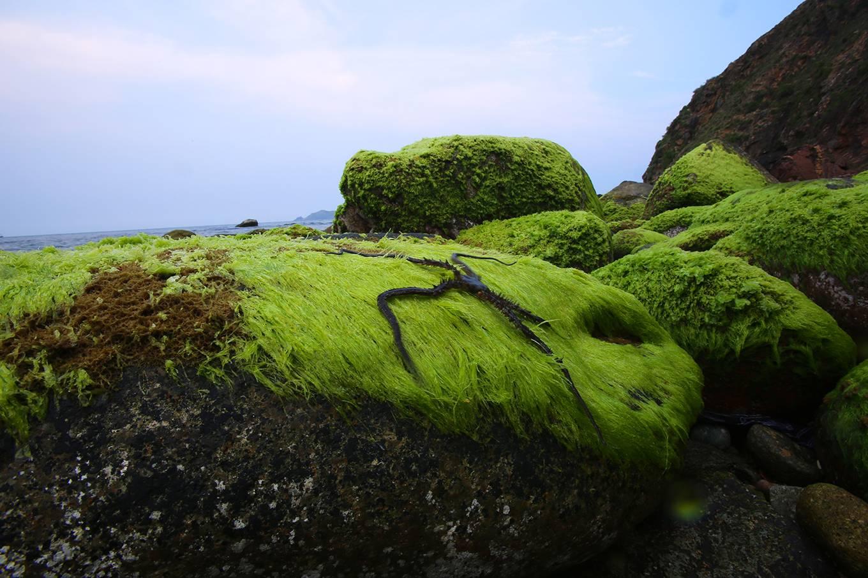 Eo Gió phủ rêu xanh khi xuân về